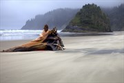 Solo, female nude, reclining on driftwood tree, at seaside.
