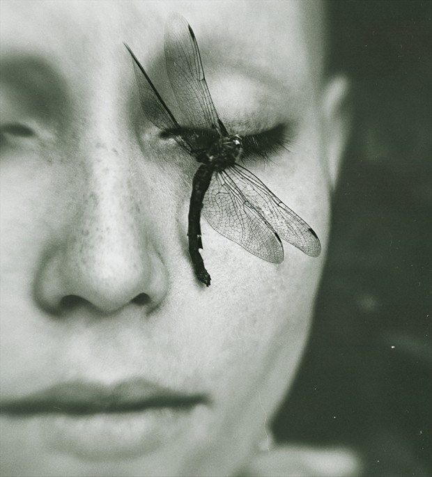 A Dragonfly's Death Surreal Photo by Photographer Natalia Drepina