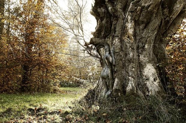 AUTUMN FOREST VI Nature Artwork by Artist Bodypaint D%C3%BCsterwald