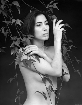 Alexia with Vines Artistic Nude Photo by Photographer Ron Skei (RonChez)