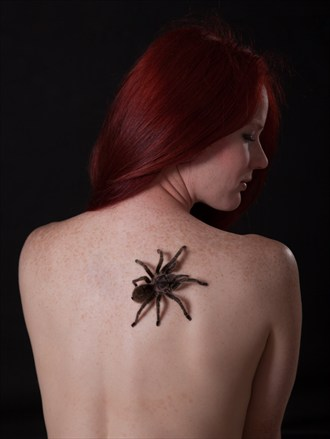 Aranae Mactans Artistic Nude Photo by Photographer Adrian Anderson