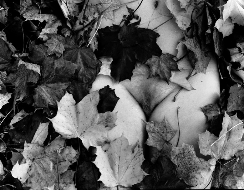 Autumn leaves Artistic Nude Photo by Photographer StudioVi2