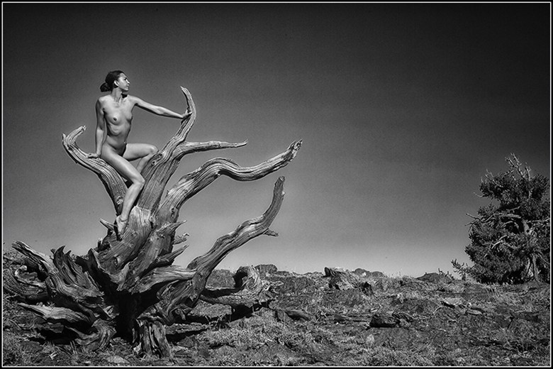 Be the Tree Artistic Nude Photo by Photographer Magicc Imagery
