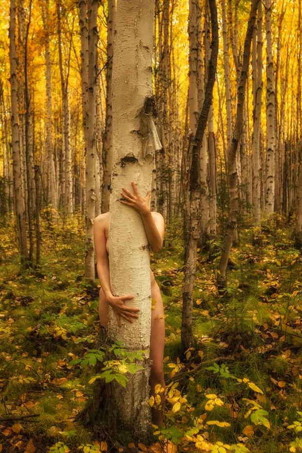 Birch Forest Embrace Nature Photo by Photographer TreeGirl