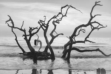 Bird in a Tree Artistic Nude Photo by Photographer Staunton Photo