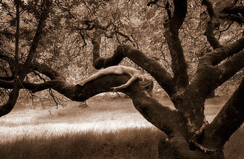 Buckeye Recline Nature Photo by Photographer TreeGirl