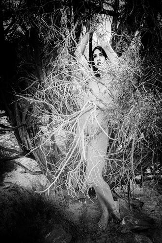 Burning Bush Artistic Nude Photo by Photographer MickeySchwartz