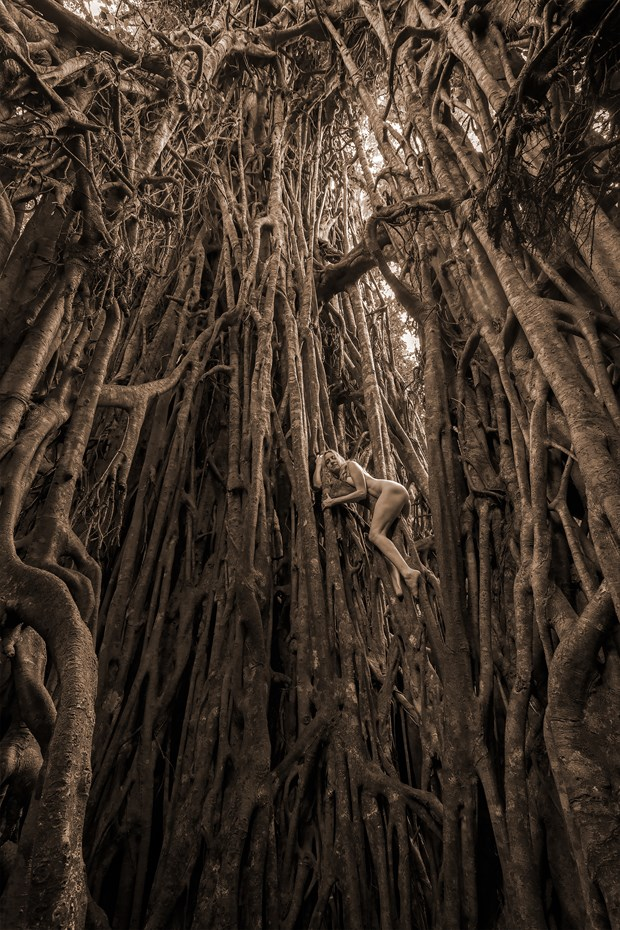 Cathedral Fig Dryad  Nature Photo by Photographer TreeGirl