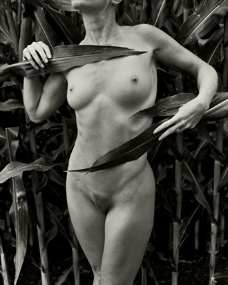 Corn Field I Artistic Nude Photo by Photographer Christopher Ryan