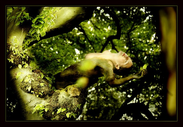 Dance of the tree Nature Photo by Photographer Laila Pregizer
