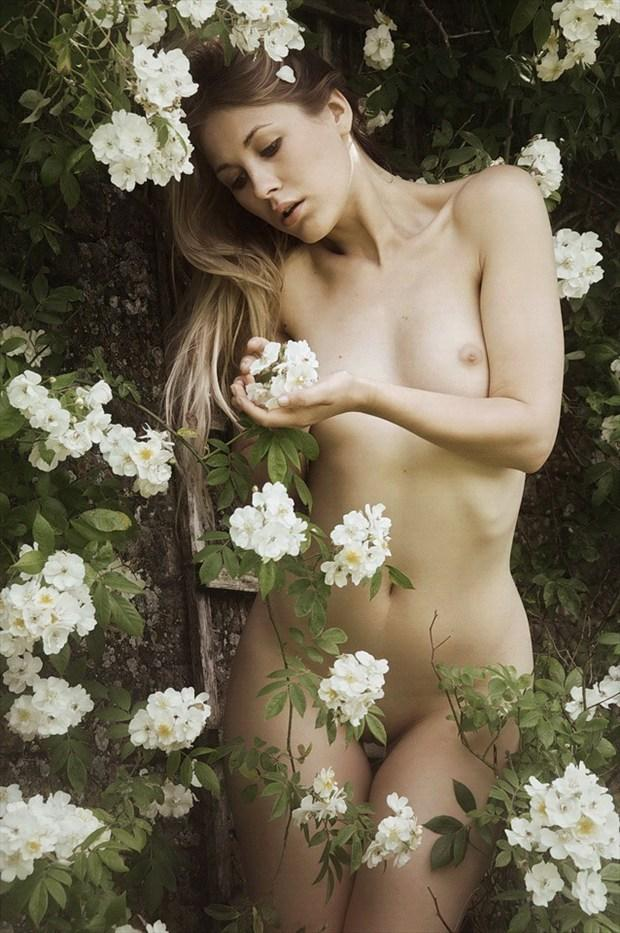 Delicate as the Rose Artistic Nude Photo by Photographer Karen Jones