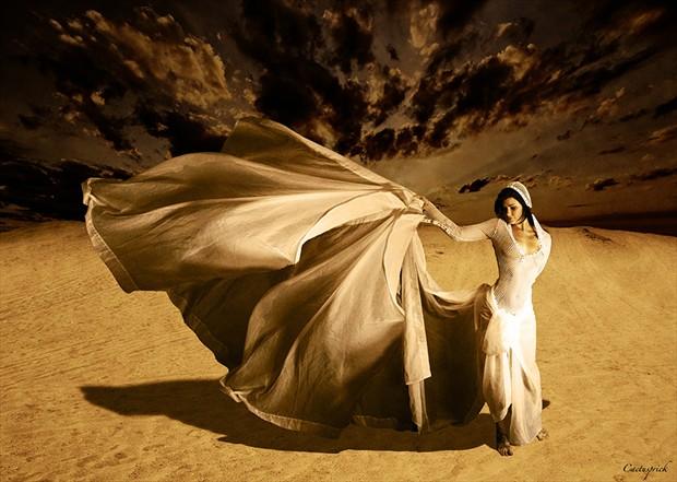 Desert Beauty Nature Photo by Photographer Cactusprick