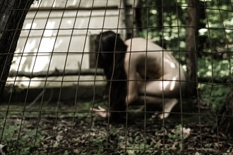 Don't fence me in Artistic Nude Photo by Photographer DaveMylesPhotography