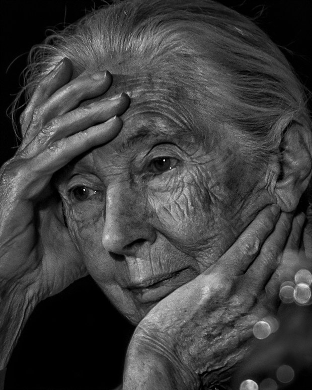 Dr. Jane Goodall, Primatologist Chiaroscuro Photo by Photographer Vincent Isner