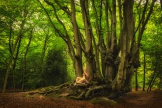 Epping Beech Enchantment Nature Photo by Photographer TreeGirl