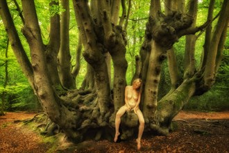 Epping Beech Eros I Nature Photo by Photographer TreeGirl
