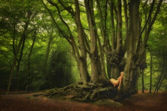 Epping Beech Mystic Nature Photo by Photographer TreeGirl