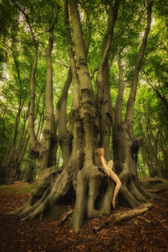 Epping Beech Scion Nature Photo by Photographer TreeGirl