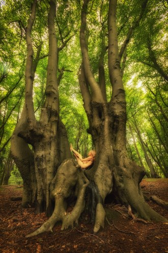 Epping Beech Yogini Nature Photo by Photographer TreeGirl