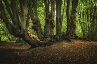 Epping Forest Restoration Nature Photo by Photographer TreeGirl