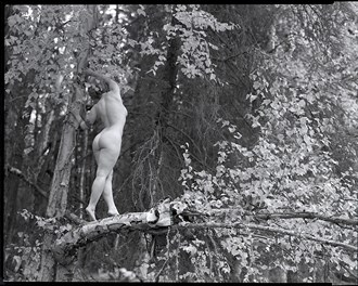 Forest figure study Artistic Nude Photo by Photographer bthphoto