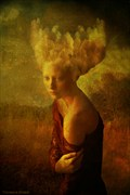 Head in the Clouds Nature Photo by Photographer Thomas Dodd