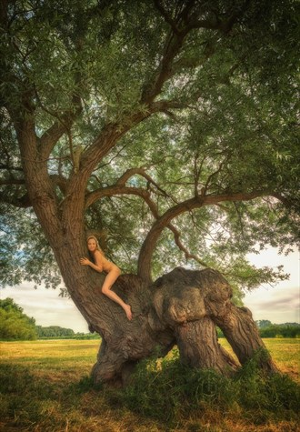 Hemingford Abbots Willow Beast Artistic Nude Photo by Photographer TreeGirl