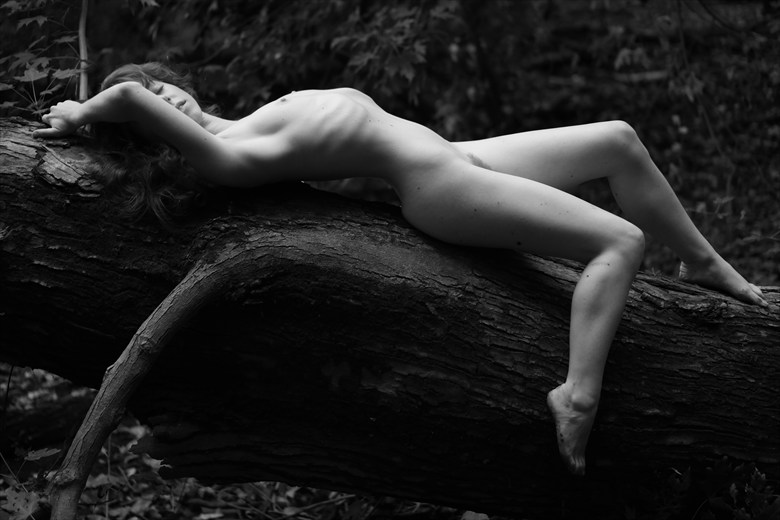 In the Quiet Woods Artistic Nude Photo by Model Liv Sage