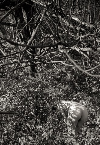 In the trees Artistic Nude Photo by Model T.Rosada