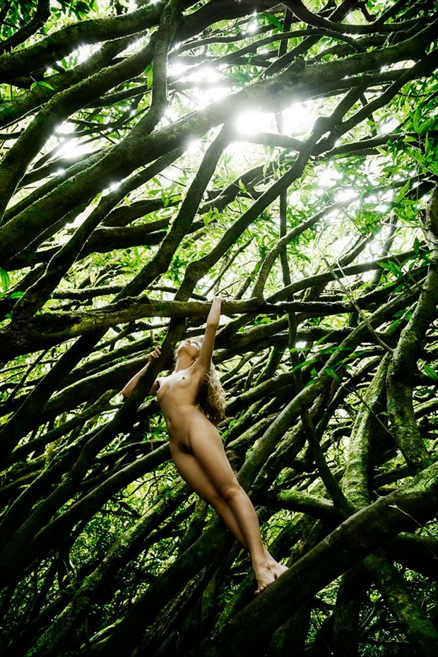 Into the tree of Life Artistic Nude Photo by Photographer Diane Rainard
