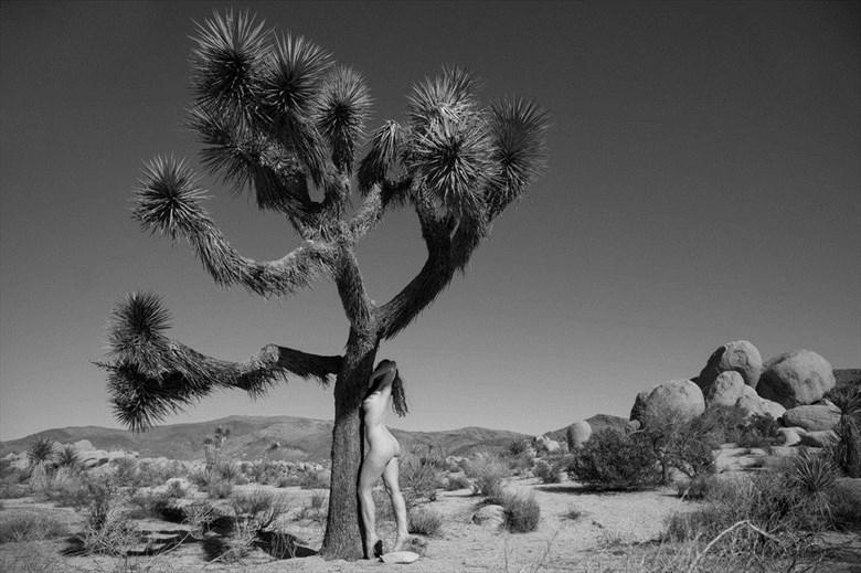 Joshua Trees Artistic Nude Photo by Model Lavanya Maya