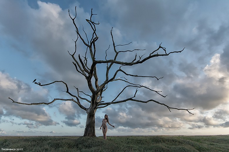 Last Tree Standing Artistic Nude Photo by Photographer Thornback