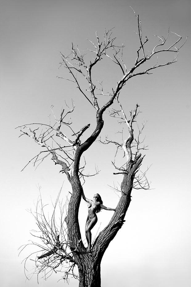Last tree Artistic Nude Photo by Photographer Roberto Manetta