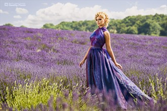 Lavender Fields Nature Photo by Photographer Quality Pixels