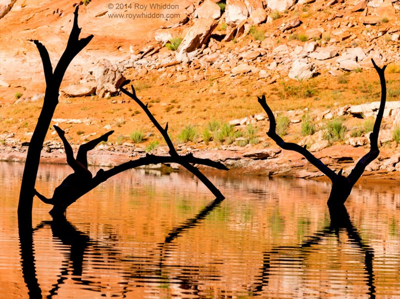 Limbs in the Lake I Artistic Nude Photo by Photographer Roy Whiddon