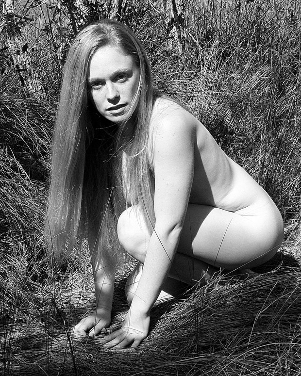 Lioness Queen Nature Photo by Photographer silverline images