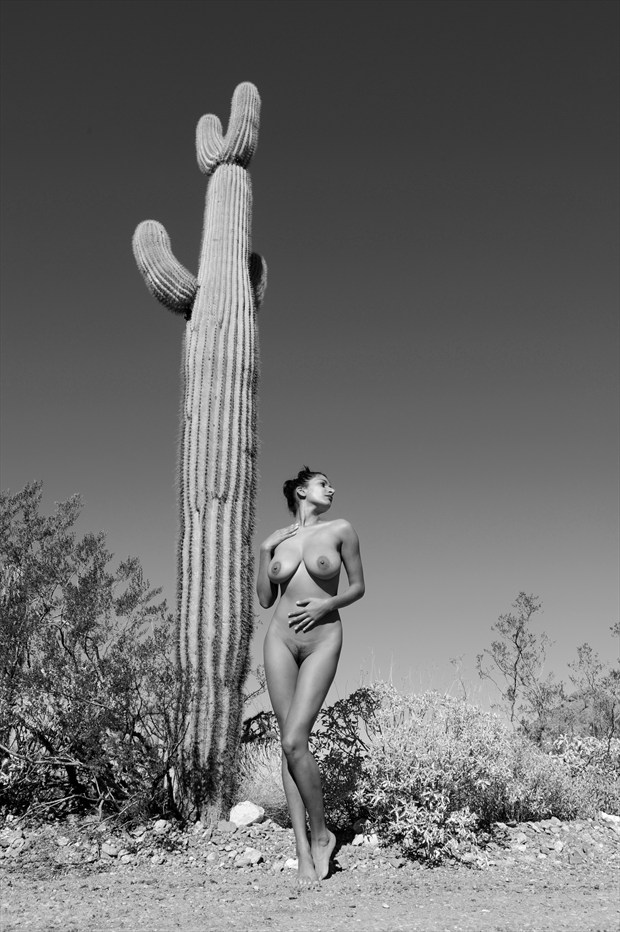 Lone Cactus Figure Study Photo by Photographer Eric Lowenberg