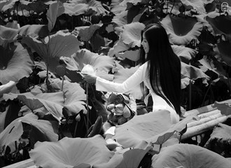 Lotus 3 Nature Artwork by Photographer Tu%E1%BA%A5n R%C3%A2u