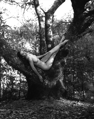 Mali in Tree Artistic Nude Photo by Photographer JMaloney