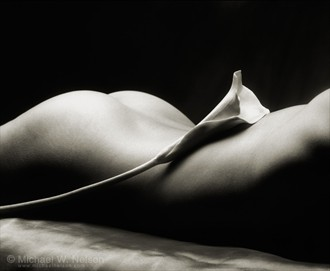 Nude and the Callalily Artistic Nude Photo by Photographer Michael Nelson