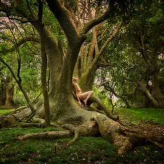Ombu Lightingment Nature Photo by Photographer TreeGirl