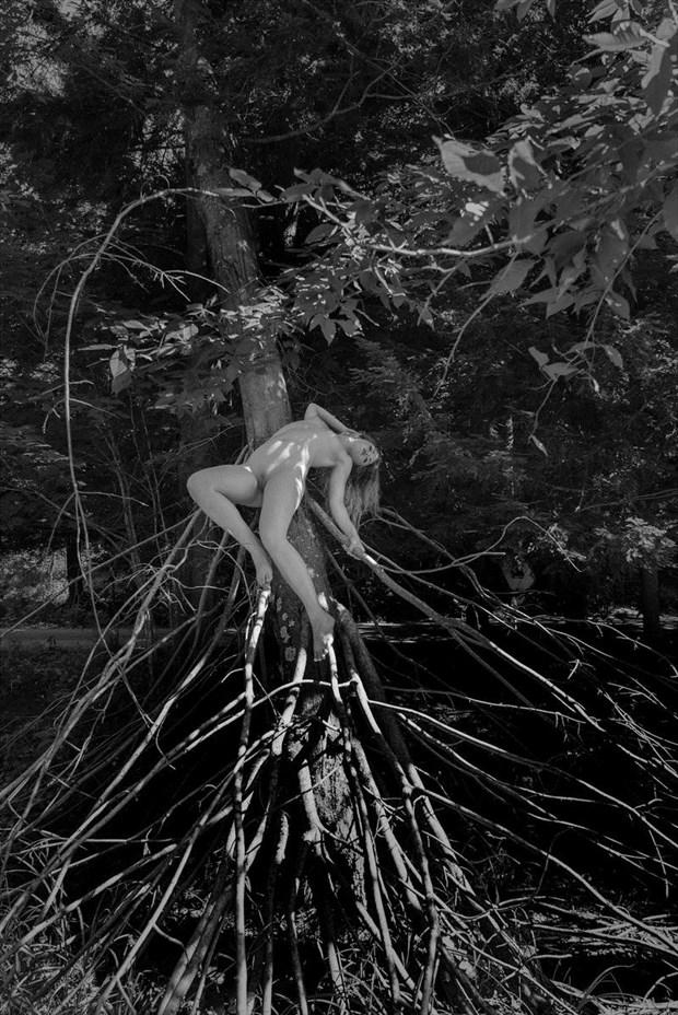 Organic Web  Nature Artwork by Model Katarina Keen