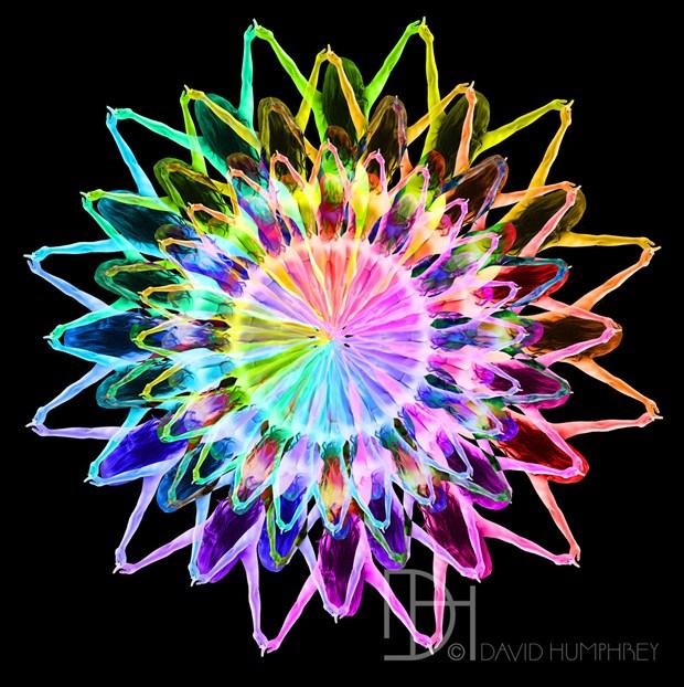 Prizmatic Kaleidoscope  Artistic Nude Artwork by Photographer David Humphrey