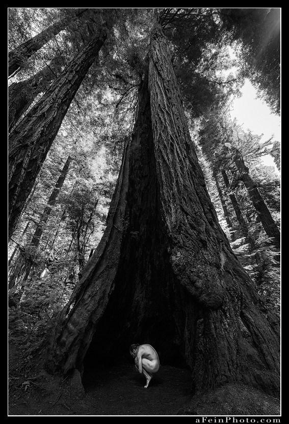 Procreation Nature Photo by Photographer aFeinberg