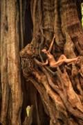 Redcedar Spirit Tree III Nature Photo by Photographer TreeGirl