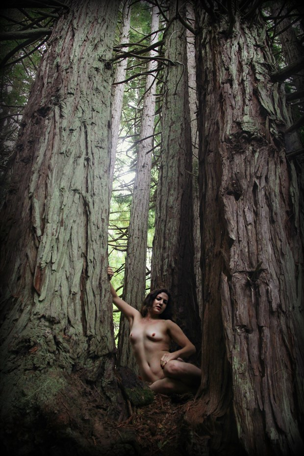 Redwood Cathedral Artistic Nude Photo by Artist AnneDeLion