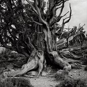 Rooted Artistic Nude Photo by Photographer Randall Hobbet