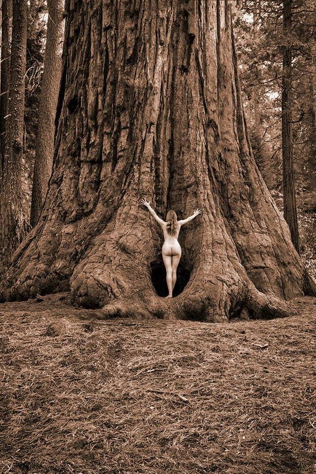 Sequoia Meditiation IV Nature Photo by Photographer TreeGirl