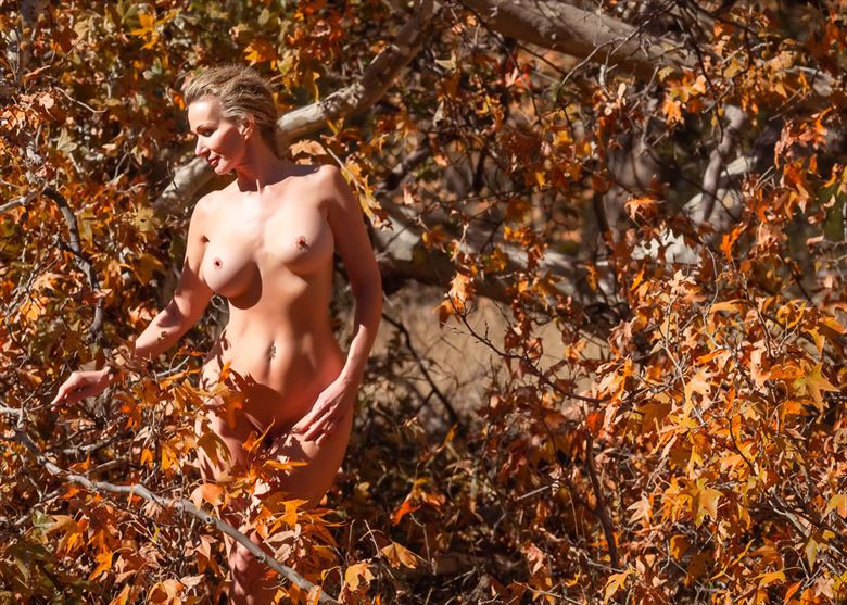 Splendor in the Forest Artistic Nude Photo by Photographer Dream Digital Photog