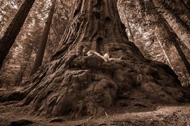 Stagg Tree Rapture Nature Photo by Photographer TreeGirl